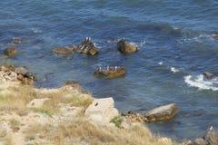 Działająca morze fala Zdjęcie Royalty Free