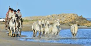 Działający Biali konie przez wody Fotografia Royalty Free
