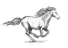 Działający cwału białego konia nakreślenia portret Obrazy Stock