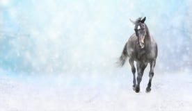 Działający czarny koń w śniegu, zima sztandar Obrazy Stock
