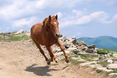 Działający koń Obraz Royalty Free