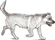 Działający pies Obrazy Stock