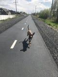 Działający pies obraz stock