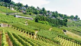 Działający pociąg blisko Lavaux winnicy Tarasuje wycieczkujący ślad blisko szwajcara Zdjęcie Royalty Free