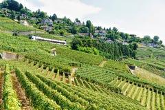 Działający pociąg blisko Lavaux winnicy Tarasuje wycieczkujący ślad w szwajcarze Zdjęcie Royalty Free