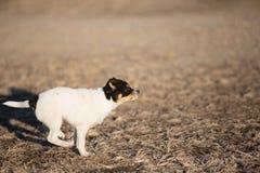 Działający szczeniaka profil zdjęcie stock