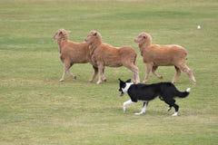 działanie psa Obrazy Stock