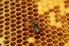 działanie pszczół Obrazy Royalty Free
