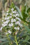 działanie grupy bee kwiat Fotografia Stock