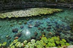 Dzibilchaltun在玛雅废墟的Cenote Xlakah 库存图片