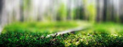 Dzicy drzewa w lesie zdjęcia royalty free