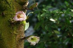Dzicy drzewo kwiaty zdjęcie stock