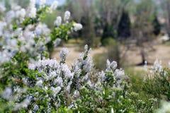 Dzicy Halni bzy i kwiaty fotografia stock