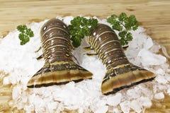 dzicy homarów złapani ogony obraz royalty free
