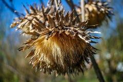Dzicy jesień kwiaty zamknięci w górę fotografia royalty free