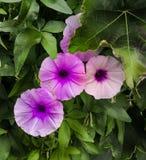 Dzicy kolorowi kwiaty nad zielonym tłem zdjęcia royalty free