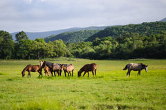 Dzicy konie na łące Obrazy Royalty Free