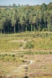 Dzicy konie pasa na jawnym footpath przed drewnem i wrzosów krzakami w Nowym lesie, UK obraz royalty free
