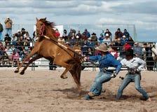 Dzicy konie przy Fachowym rodeo Zdjęcia Stock