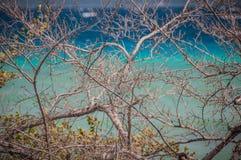 Dzicy krzaki z oceanu tłem zdjęcia stock