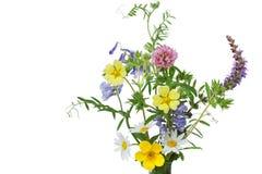 Dzicy Kwiaty Fotografia Stock