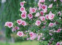 Dzicy kwiaty Zdjęcia Stock