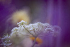 Dzicy kwiaty Obraz Royalty Free