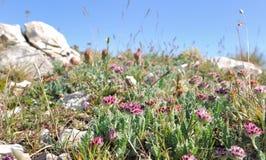Dzicy kwiaty Zdjęcia Royalty Free