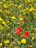 Dzicy kwiaty 02 Obraz Royalty Free