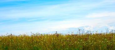 Dzicy kwiaty Zdjęcie Stock