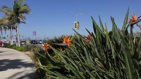 Dzicy kwiaty blisko drogi zbiory