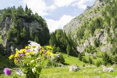 Dzicy kwiaty góra Obrazy Royalty Free