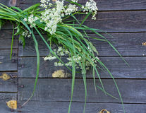 Dzicy kwiaty i zielona trawa Obrazy Royalty Free