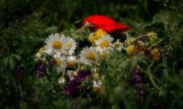 Dzicy kwiaty kłamają na trawie na lato ranku Zdjęcia Royalty Free