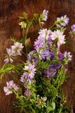 Dzicy kwiaty, korony wyka i kiciasta wyka, Obraz Royalty Free