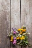 Dzicy kwiaty na starego grunge tła chamomile lupine drewnianym d Obraz Royalty Free