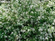 Dzicy kwiaty na zaniechanej ziemi Fotografia Stock
