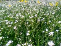 Dzicy kwiaty pod słońcem fotografia stock