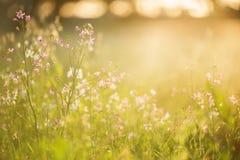Dzicy kwiaty pod zmierzchem Obrazy Royalty Free