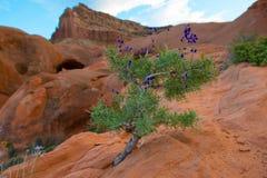 Dzicy kwiaty, Pustynny roślinności jamy punkt, Uroczysty schody - Es Zdjęcie Royalty Free