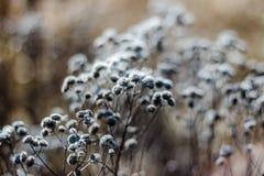 Dzicy kwiaty/trawa kwitną w seriach 02 Fotografia Royalty Free