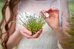 Dzicy kwiaty w delikatnych rękach panna młoda obraz stock