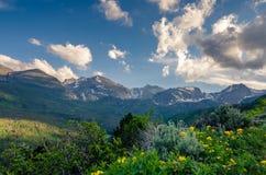 Dzicy kwiaty w górach Zdjęcia Stock