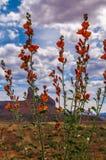 Dzicy kwiaty w igłach Obrazy Royalty Free