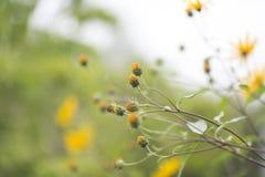 Dzicy kwiaty w ogródzie Obrazy Stock