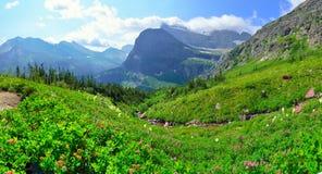 Dzicy kwiaty w panoramicznym Wysokim wysokogórskim krajobrazie na Grinnell lodowu wlec w lodowa parku narodowym, Montana obraz stock