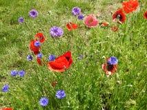 Dzicy kwiaty w polu Obrazy Royalty Free