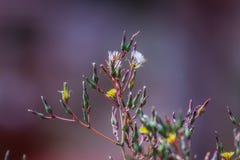 Dzicy kwiaty w Rumunia zdjęcia stock