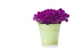 Dzicy kwiaty w wiadrze odizolowywającym obraz stock