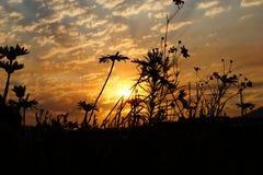 Dzicy kwiaty w wschodzie słońca Zdjęcie Royalty Free